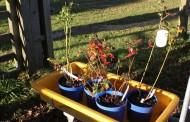 Outdoors: The Blueberry Garden