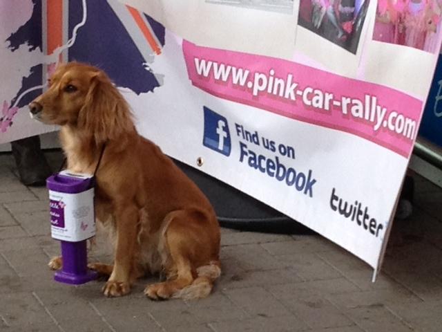 Pink Cars Big Fundraiser
