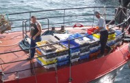 EU Law: No Discards on Fish Catches