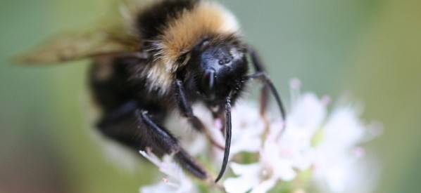 Good News on Bee-ing Heard