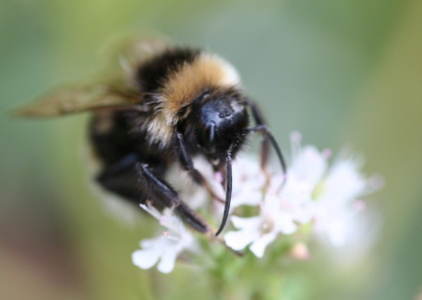 Good News on Bee-ing Heard