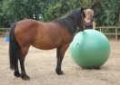 Playing Ball with Horses – Video